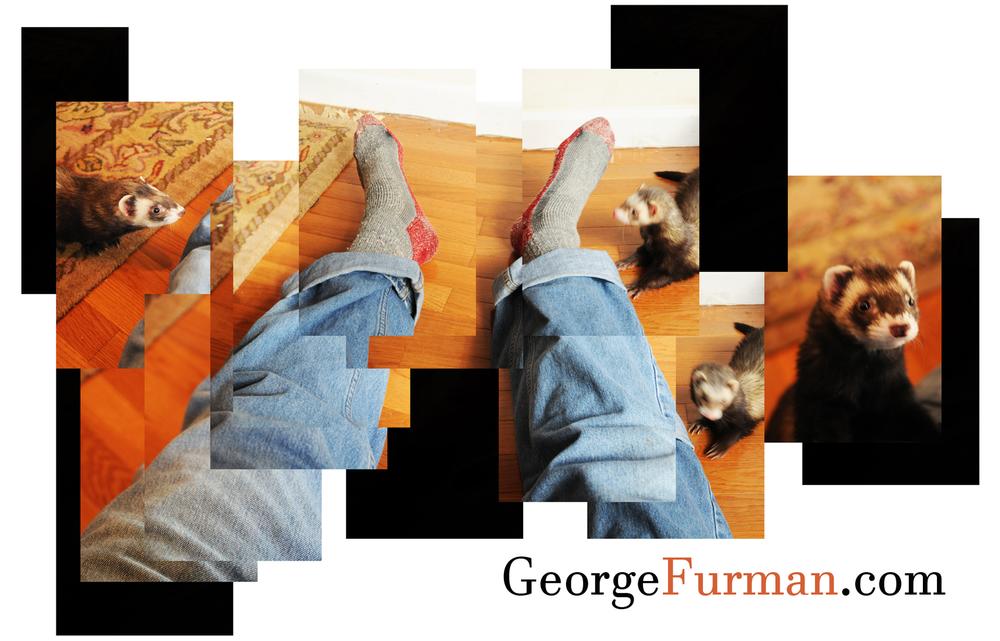 ferret my feet 2.jpg