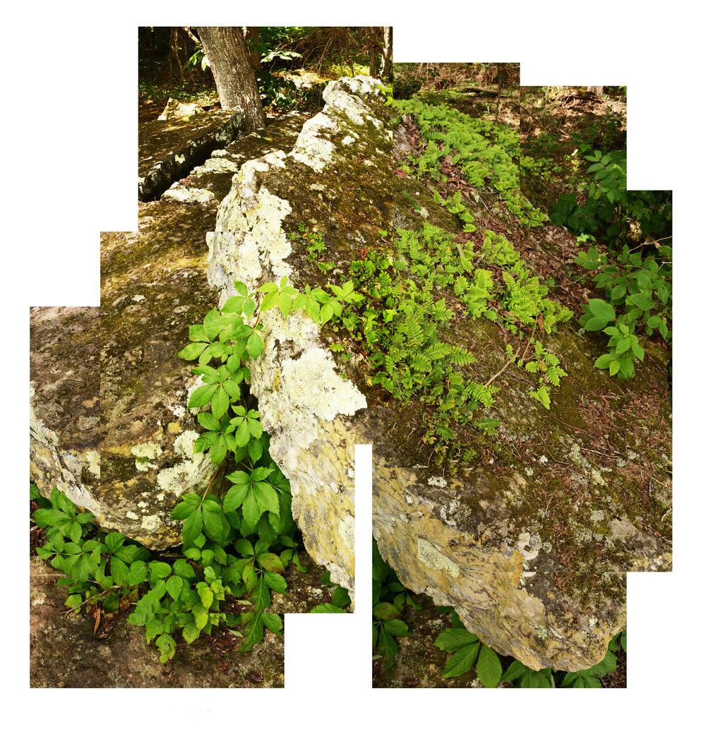 4 Fern Rock