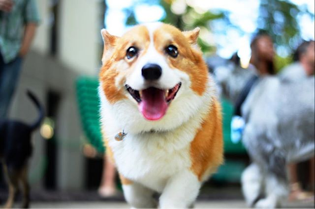🐕 Dog friendly and proud of it. 🐕 Here at PPM Apartments we ❤️ dogs. That's why we have several buildings with dog parks and several more with ZERO pet fees. We've got 32 fantastic buildings in Lakeview, Lincoln Park, Gold Coast and River North!  Wanna learn more about us? Check out our bio link! Or, call us! ☎️773-570-3744 • • • • • • • • • • • • • • • #chicagoliving #apartments #chicagogram #chicagoviews #chicago