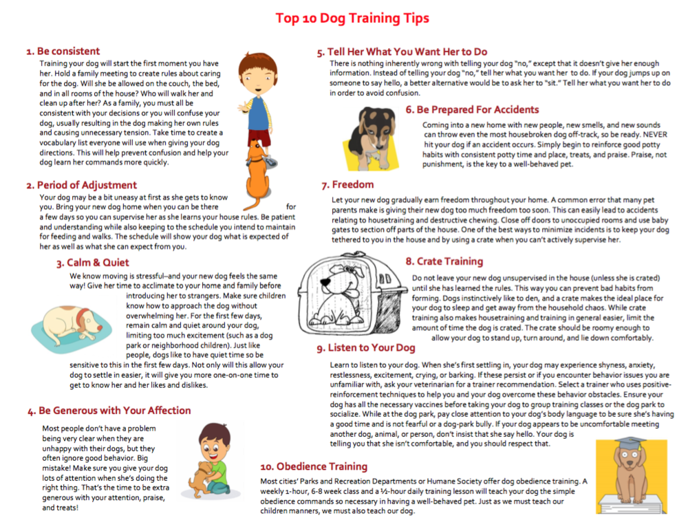 Top 10 Dog Training Tips    The top experts give you their tips for training. Get a jump on training with these Top 10 Training Tips.