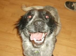 KIZZY – ADOPTed!