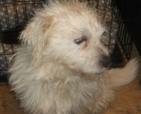 snowball–ADOPTed!