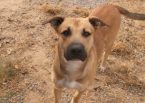 DYLAN – ADOPTED!