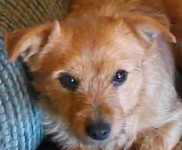 sandy – ADOPTED!