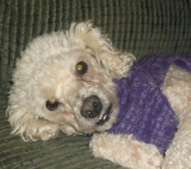 MOSES – ADOPTED!