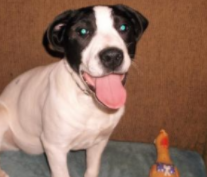 VAL – ADOPTED!
