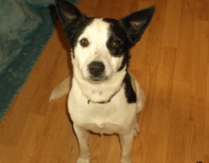 Becky – adopted!