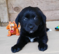 Ralph – ADOPTed!