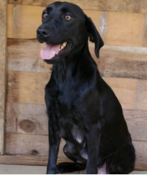 LADY – ADOPTED!