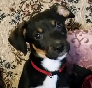 tink – ADOPTED!