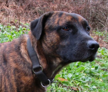 roscoe – ADOPTED!