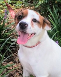 Finch – ADOPTED!
