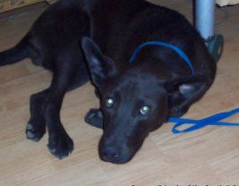 beaux — ADOPTED!