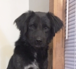 Shaggy — ADOPTED!