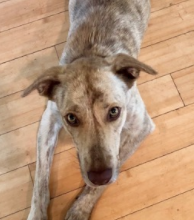 SANDY — ADOPTED!
