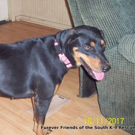REESE – ADOPTED!
