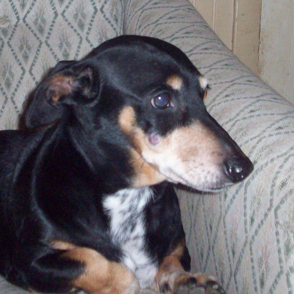 EMmett — Adopted!