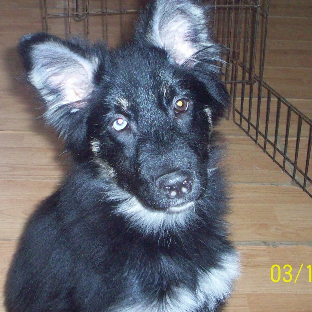lewis – ADOPTED!