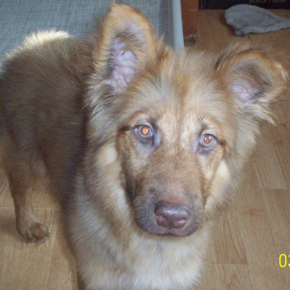 clark – ADOPTED!