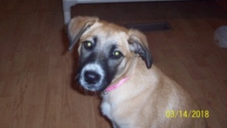DAYZEE — ADOPTED!