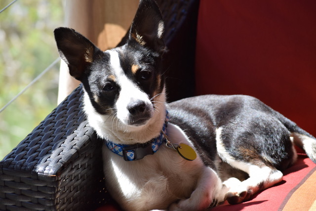 TRIXIE – ADOPTED!