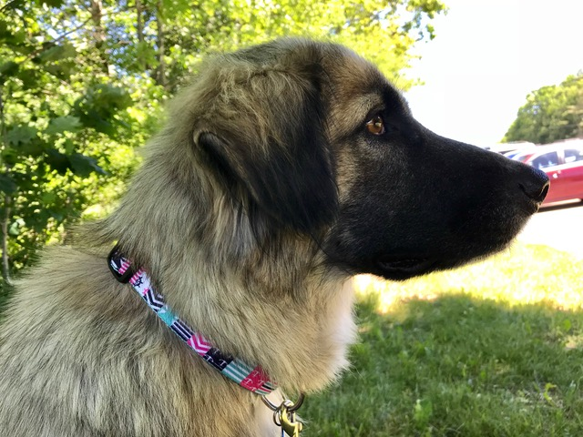Maxine – ADOPTED!