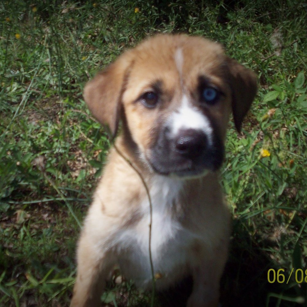Alexis – ADOPTED!