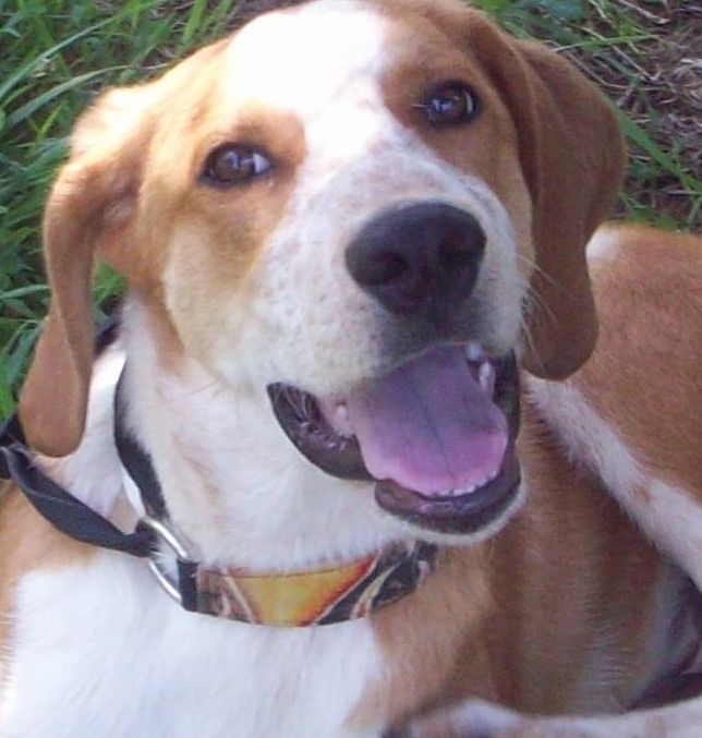 tyke – ADOPTED!