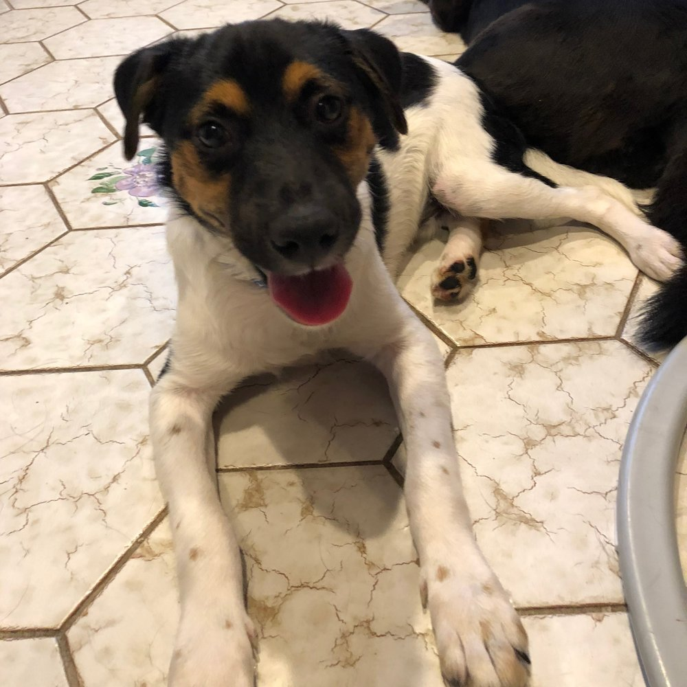 Vail – ADOPTED!