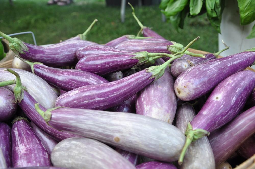 Japanese Eggplant,Deep Meadow Farm