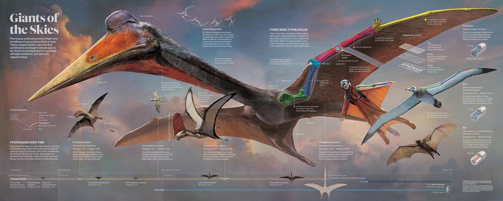 pterosaurs_GATE_WEB.png