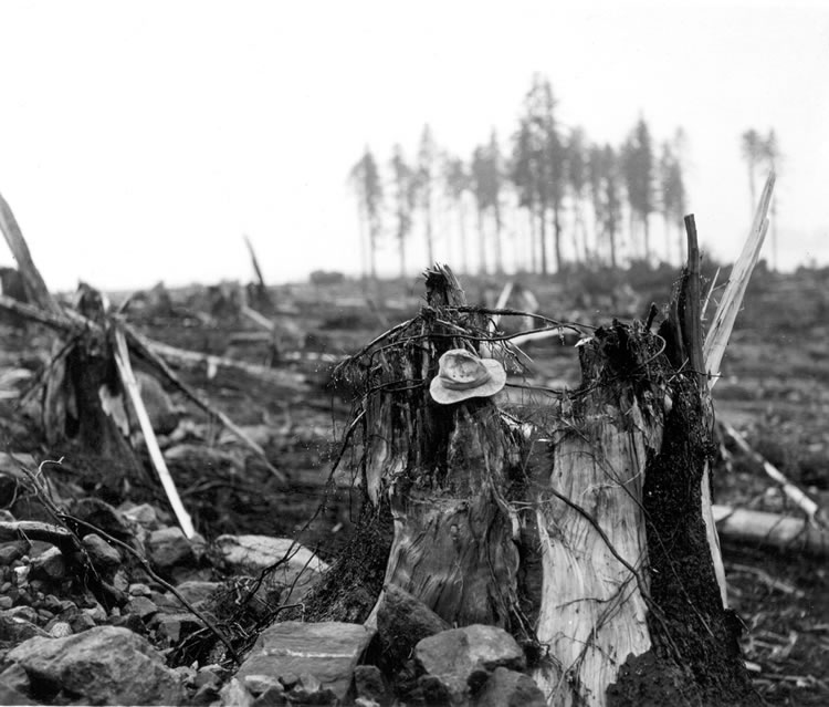 The remains of a spruce tree near the entrance of Lituya Bay