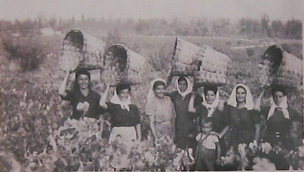 Harvest in Rioja in the 1920's