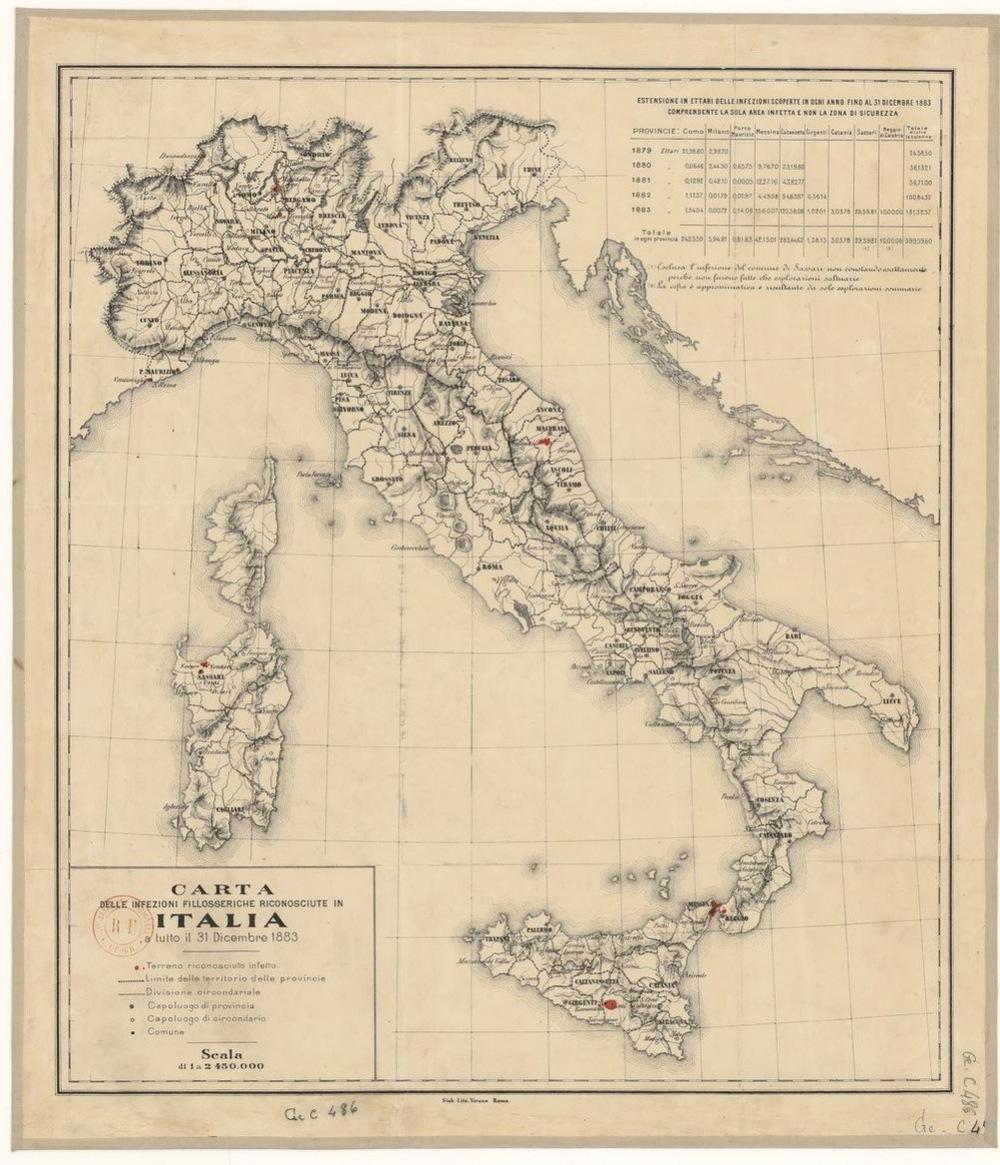 Italy Phylloxera.jpg