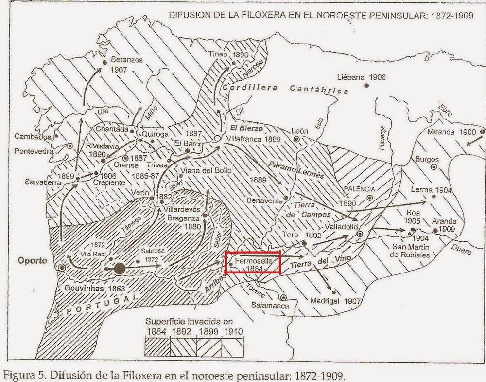 mapa de la filoxera en Fermoselle 002.jpg