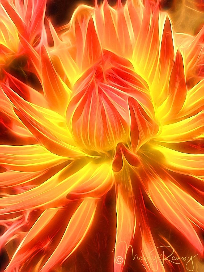 Inner Glow Dahlia watermarked.JPG