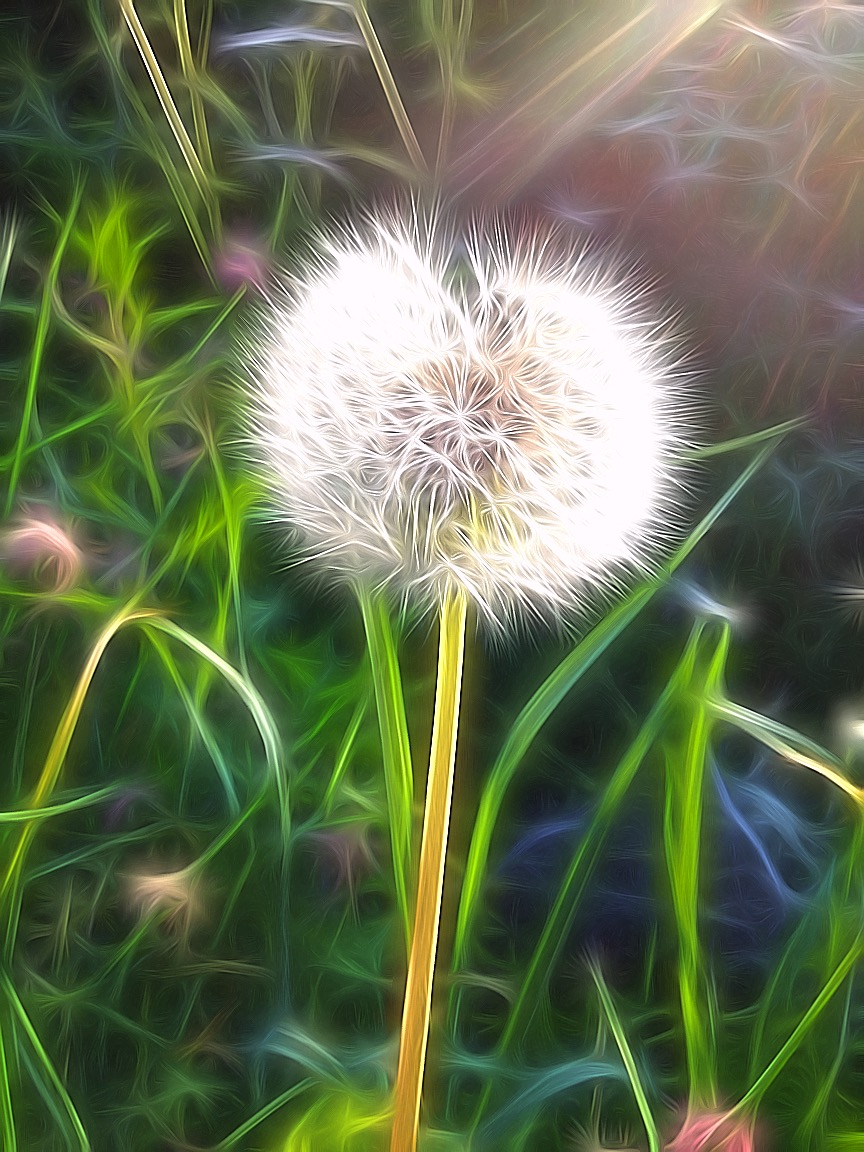 Dandelion Spirit.jpg