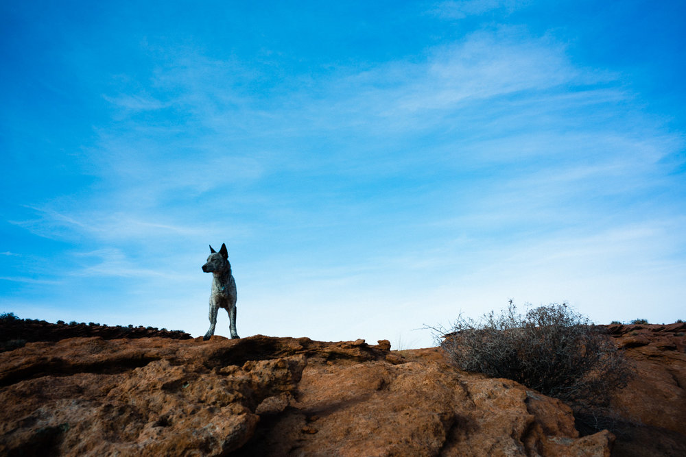 """The horse guide's (nice guy, don't recall his name) dog, Lucy. Super friendly and inquisitive, she followed some other hikers and disappeared never to be seen again. I asked the guide about her and he very nonchalantly said, """"She knows her way home."""""""