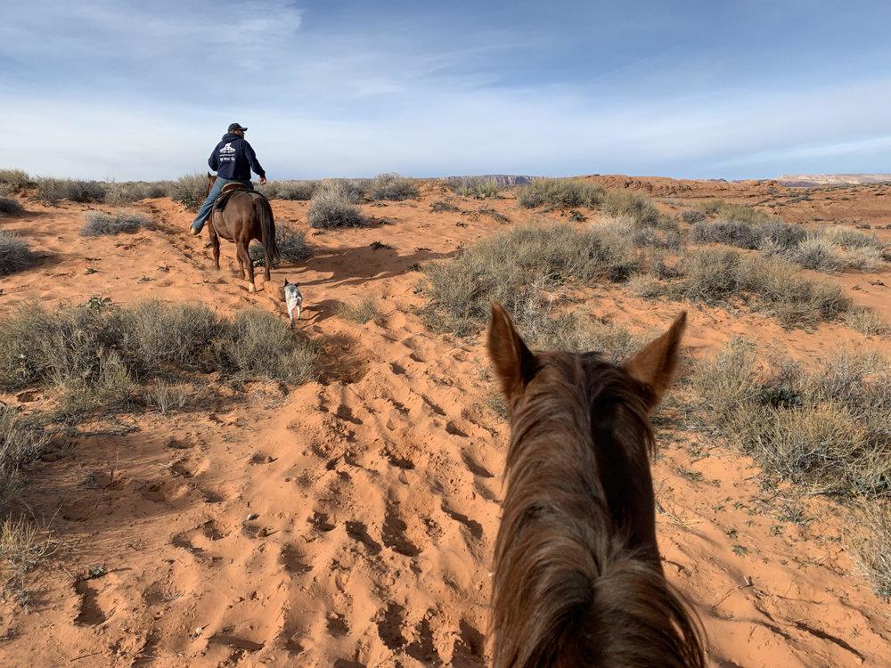 Deserts are always best explored on quadrupeds.