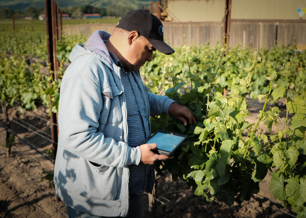 Technology is used to track our vineyard practices and create reports to help us better custom farm our vineyards.