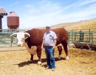 C.R. Fedrick with Herbie, a prize Hereford bull, circa 1985.