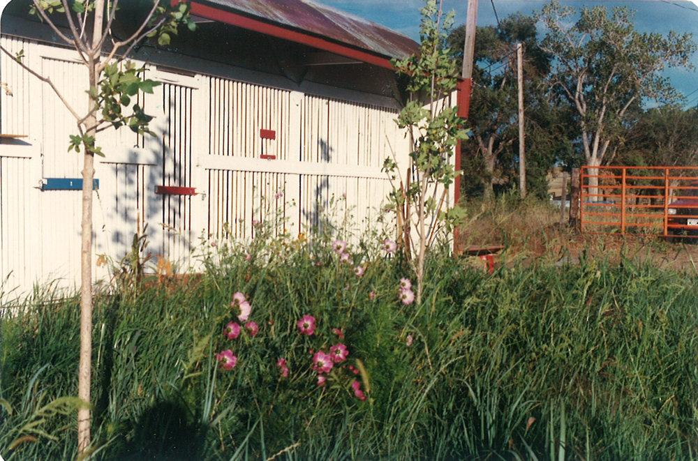 Home And Backyard our history — birds of prey foundation | broomfield, colorado