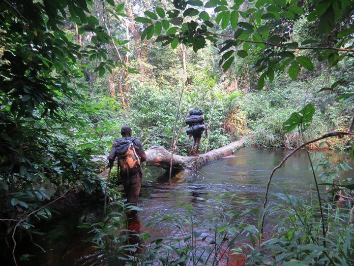 Lieven Devreese and Gaël Elie Gnondo Gobolo/Ntokou-Pikounda National Park, DRC