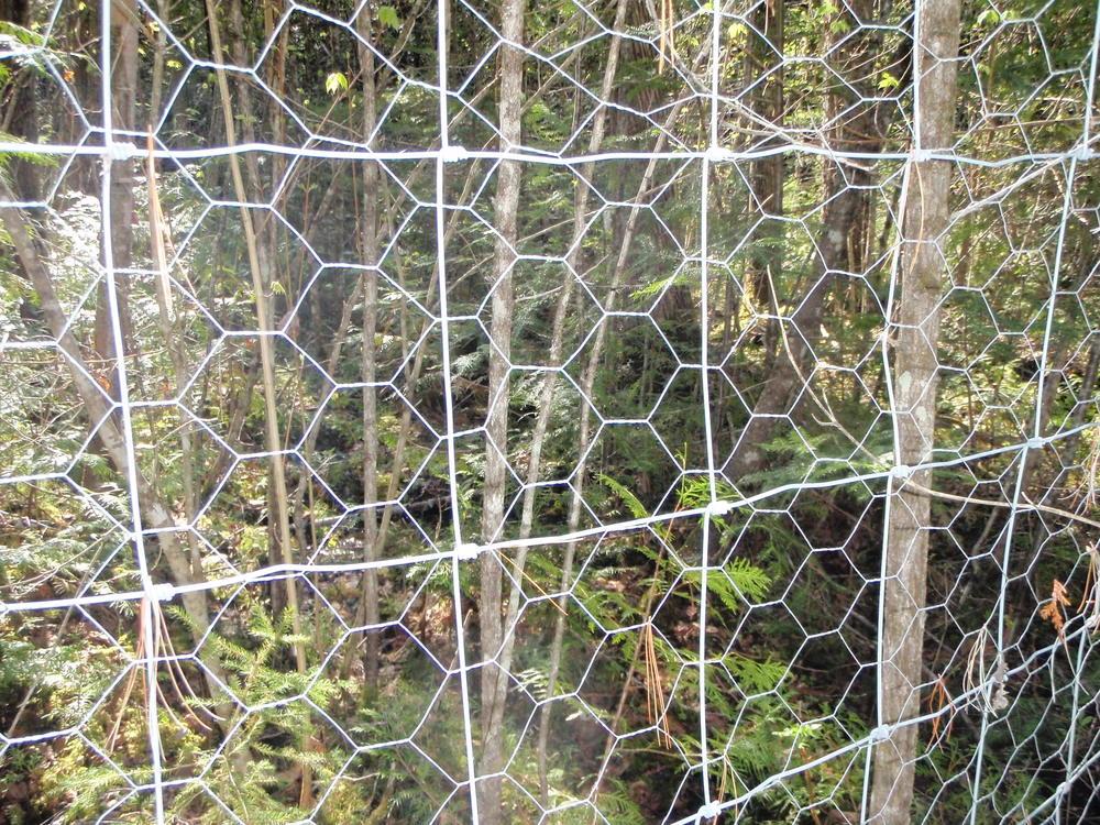 Dans une forêt de l'Outaouais (du thuya à l'intérieur, aucun à l'extérieur !)