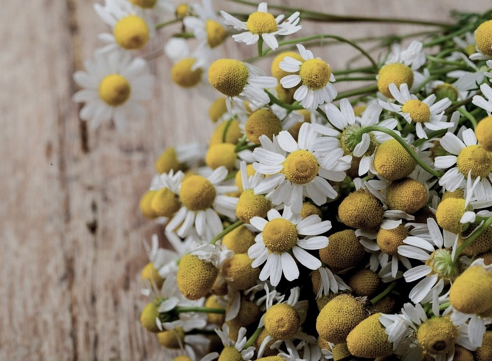 chamomile-flowers-on-board.jpg