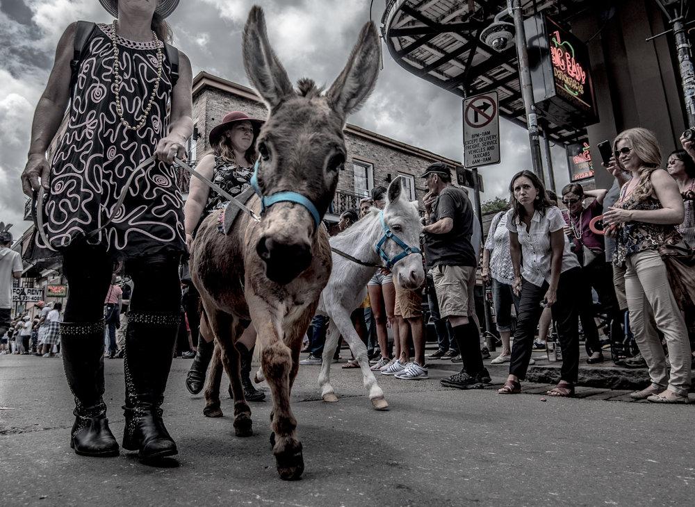 Donkey at Parade.jpg
