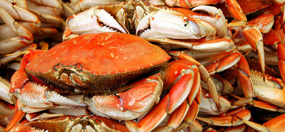 area-info-dungeness-crab-03.jpg