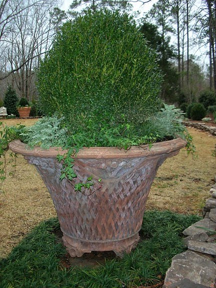 Tips For January Gardening In The Deep South James Farmer