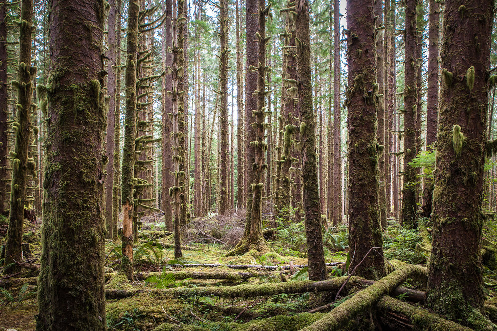 Forks, WA |Sept 2015|_1 (1 of 1).jpg