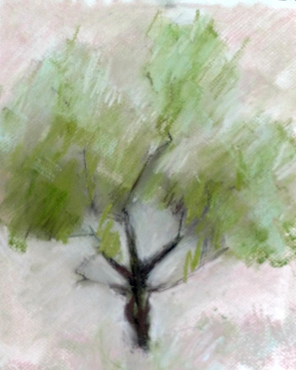 oliveTree#2.jpg